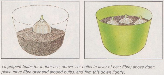 bulbs for indoor use