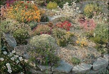 alpine plants for a gravel garden