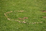 Lawncare: Pests and Diseases Affecting Lawns