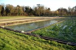 How to Grow the Best Watercress