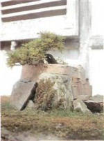 Bonsai: Growing Conditions for Development