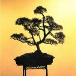 Bonsai Plants: Indoor Bonsai or Outdoor Bonsai?