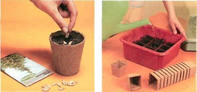 Peat pots are excellent for seed sowing. Before sowing or potting up, soak peat pots.