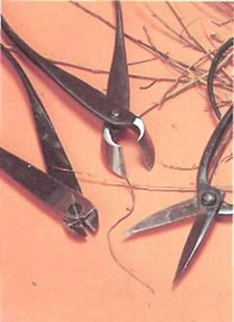 Some impressive equipment used for wiring trees. From left to right: wire cutters, brunch cutters and scissors. Keep them sharp