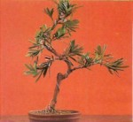 Types of Indoor Bonsai Plants and Trees