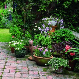 Gardening in Pots Tubs and Containers
