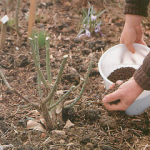 Garden Fertilizers and Feeding