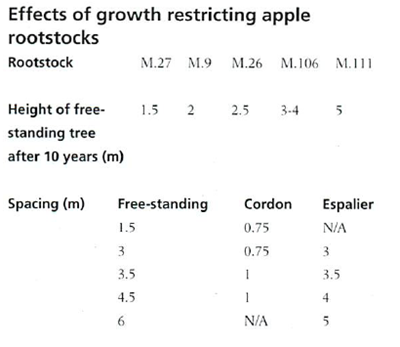 effects of growth restricting apple rootstocks