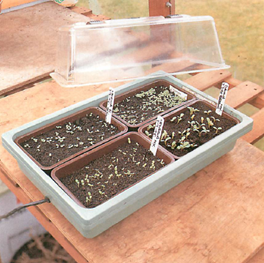 seedling in trays