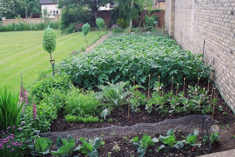 Planning A Vegetable Garden Growing Your Own Vegetables